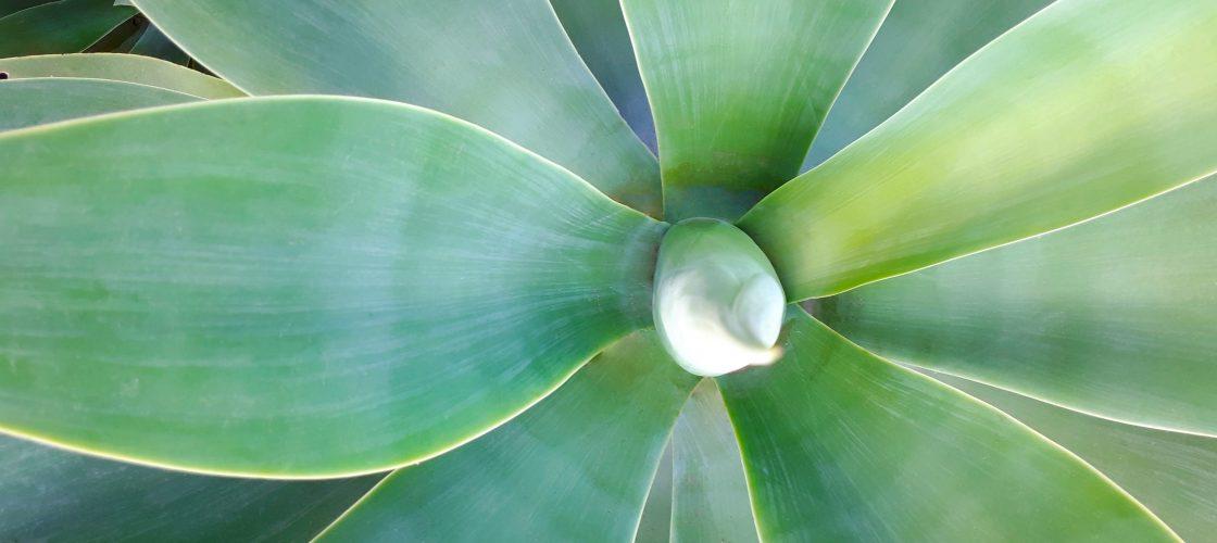 plant-2780418